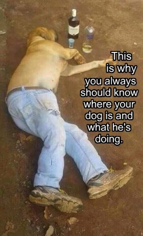 you always should know where your dog is and what he's doing.