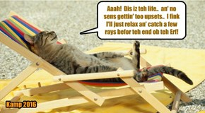Many kitties take in stride teh sensashunal news ob teh End ob teh Wurld in just 15 minutes!