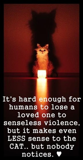It's hard enough for humans to lose a loved one to senseless violence, but it makes even LESS sense to the CAT.. but nobody notices. ♥