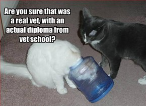 Are you sure that was a real vet, with an actual diploma from vet school?