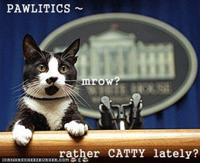 PAWLITICS ~ mrow? rather  CATTY  lately?