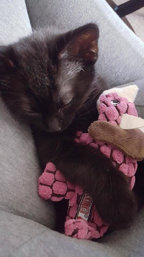 Minnie napping with her dino
