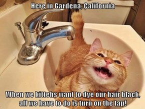 Here in Gardena, California  When we kittehs want to dye our hair black, all we have to do is turn on the tap!