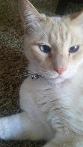 Cross-eye Kitteh
