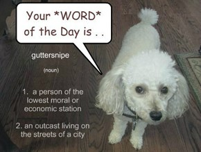 Nugget's *WORD* of the DAY