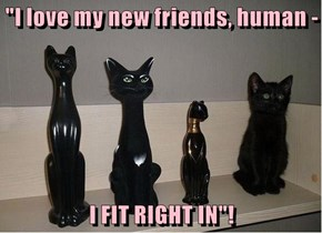 """I love my new friends, human -  I FIT RIGHT IN""!"