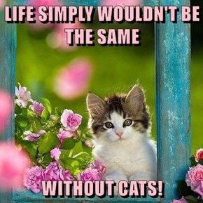 LIFE SIMPLY WOULDN'T BE THE SAME  WITHOUT CATS!