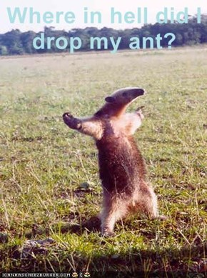 Where in hell did I drop my ant?