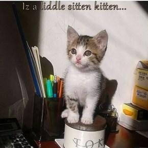 Iz a liddle sitten kitten...
