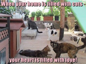 When your home is filled with cats