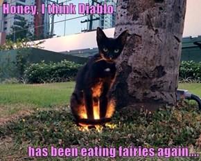 Honey, I think Diablo  has been eating fairies again....