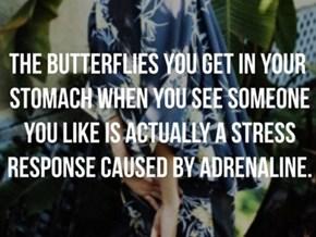Not ACTUAL Butterflies