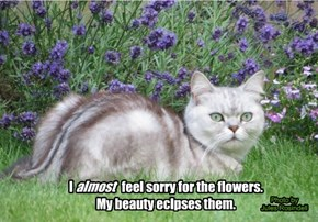 I                    feel sorry for the flowers. My beauty eclpses them.