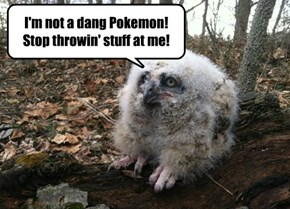 I'm not a dang Pokemon! Stop throwin' stuff at me!