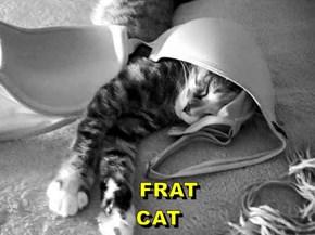 FRAT                                                                    CAT