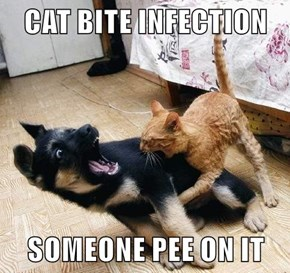 CAT BITE INFECTION   SOMEONE PEE ON IT