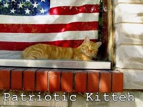 Patriotic Kitteh