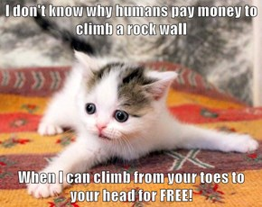 I don't know why humans pay money to climb a rock wall  When I can climb from your toes to your head for FREE!