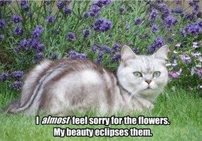 I                    feel sorry for the flowers. My beauty eclipses them.