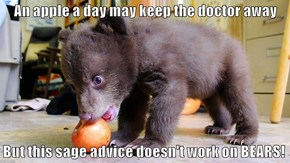 An apple a day may keep the doctor away  But this sage advice doesn't work on BEARS!