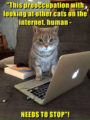 """This preoccupation with looking at other cats on the internet, human -  NEEDS TO STOP""!"