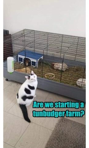 Are we starting a tunbudger farm?
