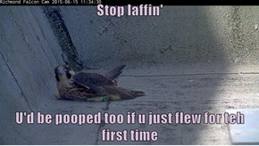 Stop laffin'  U'd be pooped too if u just flew for teh first time