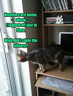 Hoomins are home.  whew    I logged off just in time.   Wait, did I clear the history?
