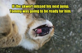 IF the skwerl missed his next jump, Tommy was going to be ready for him.