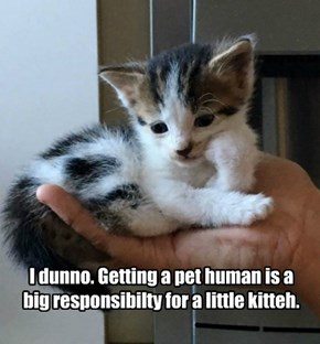 I dunno. Getting a pet human is a big responsibilty for a little kitteh.