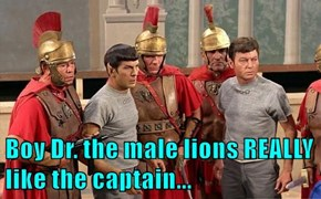 Boy Dr. the male lions REALLY like the captain...