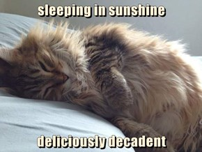 sleeping in sunshine  deliciously decadent