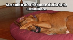 Sam hated it when the humans tried to do the Carlton Dance.
