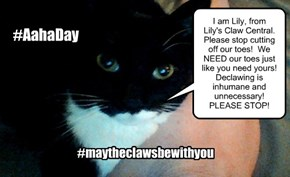Declawing - Aaha Day