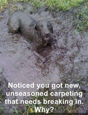 Noticed you got new, unseasoned carpeting that needs breaking in. Why?