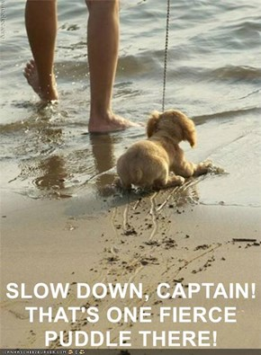 SLOW DOWN, CAPTAIN! THAT'S ONE FIERCE PUDDLE THERE!