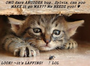 OMG darz ANUDDER bug.. Sylvia, can yoo MAKE it go WAY?? Me NEEDZ yoo! ♥   LOOK! ~it's LAFFING!    ↑ LOL