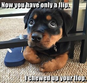 Now you have only a flip.  I chewed up your flop.