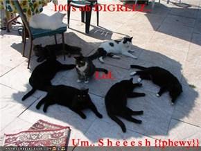 100's ob DIGREEZ..    LoL Um.. S h e e e s h {{phewy}}