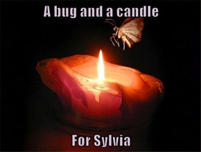 A bug and a candle  For Sylvia