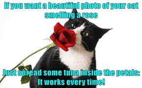 If you want a beautiful photo of your cat smelling a rose  Just spread some tuna inside the petals: It works every time!