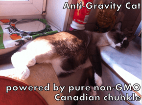 Anti-Gravity Cat  powered by pure non-GMO Canadian chunkle