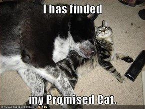 I has finded  my Promised Cat.