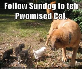 Follow Sundog to teh Pwomised Cat.