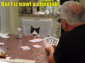 But I iz nawt a cheetah!