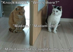 """Knock knock."" ""Who's there?"" ""Madam."" ""Madam who?"" ""Mah damn tail's caught in the door!"""