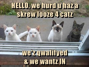 HELLO, we hurd u haz a skrew looze 4 catz  we'z qwalifyed                                                               & we wantz IN