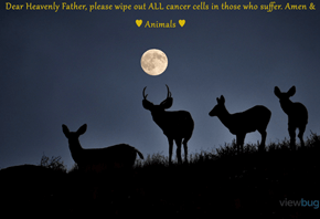 Dear Heavenly Father, please wipe out ALL cancer cells in those who suffer. Amen & ♥ Animals ♥