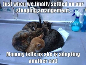 Just when we finally settled on our sleeping arrangement,  Mommy tells us she is adopting another cat!