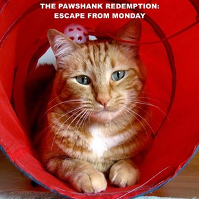 THE PAWSHANK REDEMPTION:                                                                             ESCAPE FROM MONDAY